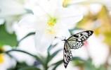 wiosna - czas na miłość